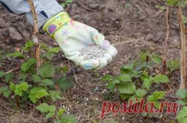 Какие удобрения вносить весной: чем подкормить сад, огород, газон и цветник | Дела огородные (Огород.ru)