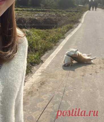 Фото весёлых собак, которые и дня не могут прожить, чтобы не рассмешить своих владельцев