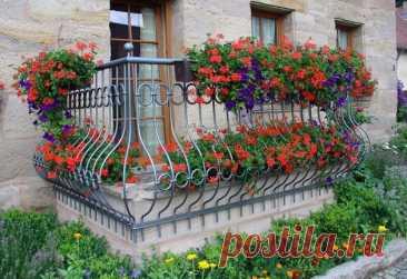 Цветы на балконе. Какие цветы на балконе посадить. Цветы на балконе. Какие цветы на балконе лучше всего посадить. Какие цветы и растения устойчивы к морозам и солнцу. Советы по уходу за цветами на балконе.