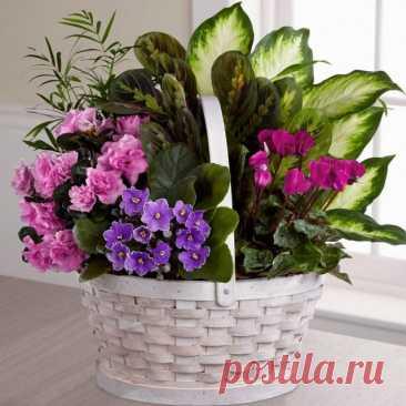 Цветочная композиция на подоконнике — Ботаничка.ru