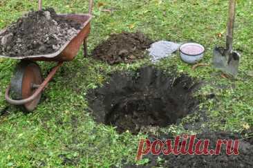 Правильная посадочная яма: размеры, сроки, удобрения (в таблицах) | Уход за садом (Огород.ru)