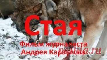 Стая. Фильм Андрея Караулова