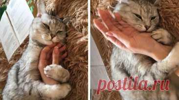 12 феноменальных фактов о кошках, которые заставляют усомниться в их земном происхождении Хвостато-усатые создания, которые в восторге от коробок, по-прежнему остаются загадкой для своих хозяев. Их физиология и поведение неизменно интересуют ученых, и чуть ли не ежегодно пушистые звезды ин...