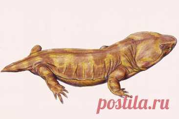 В США нашли микрозавра возрастом более 300 млн лет Американские палеонтологи обнаружили на территории штата Иллинойс останки древнего динозавроподобного существа, жившего 308 миллионов лет назад. Оно отличалось очень миниатюрным размером, сообщаетRoyal Society Open Science.Ученые идентифицировали находку как микрозавра ранее...