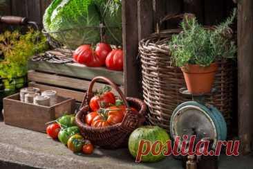 Урожай: как сохранить собранное с приусадебного участка? Урожай необходимо уметь не только собирать, но и правильно научиться сохранять. Ведь большую часть продуктов мы закладываем в погреба и подвалы на зимовку.