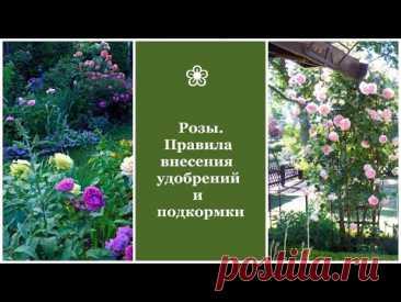 ❀ Розы. Правила внесения удобрений и подкормки