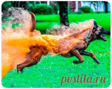 Фотошоп? 20 фотографий, в которые трудно поверить | FOCUS | Яндекс Дзен