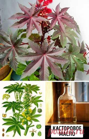 11 страшно ядовитых растений, о которых необходимо знать каждому   6 соток