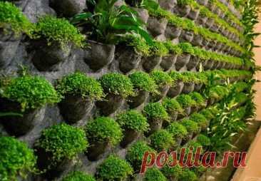 Живая стена из растений своими руками в квартире -