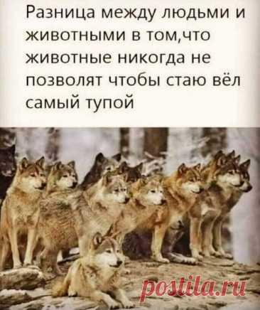 Александр Учуватов Фотография в альбоме «ВОЛК-ОДИНОЧКА»