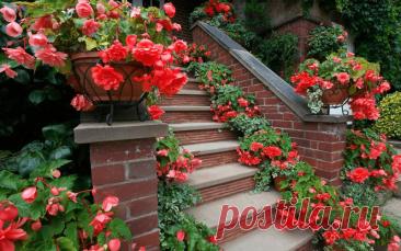 Цветы возле дома: в горшках, вазонах, контейнерах и кашпо Цветы возле дома: в горшках, вазонах, контейнерах и кашпо Собери букет цветов. Узнай название цветов, красивые цветы для любой девушки. Какие растения цветы, а какие нет. Сделай цветник своими руками и проверь как посажены цветы.