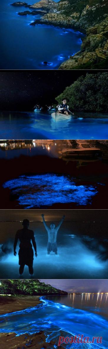 10 волшебных заливов планеты, которые преображаются ночью / Туристический спутник