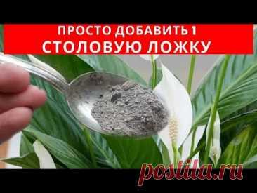 1 СТОЛОВАЯ ЛОЖКА этого вещества заставит БУРНО и ДОЛГО цвести КОМНАТНЫЕ РАСТЕНИЯ - YouTube