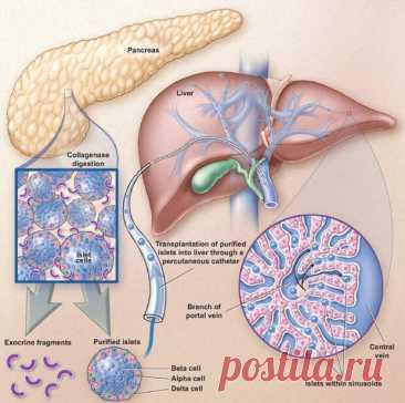 Лечение травами заболеваний печени, желчного пузыря и поджелудочной железы