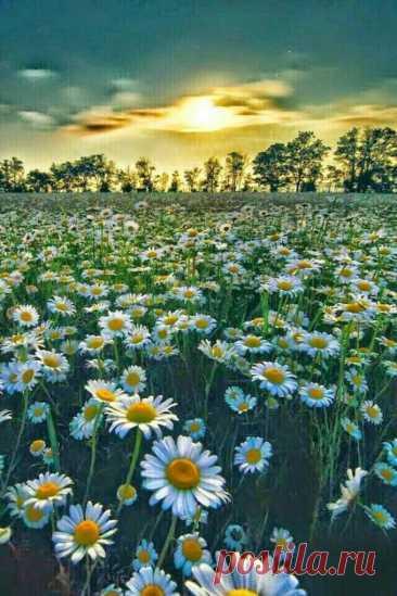 «🌺 Рассветы и закаты 🌺 » в Яндекс.Коллекциях