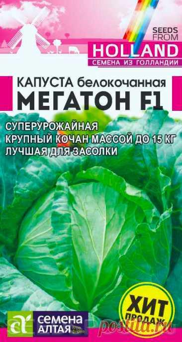 Капуста белокочанная Мегатон F1, 10 шт. Bejo Zaden, купить в интернет магазине Seedspost.ru