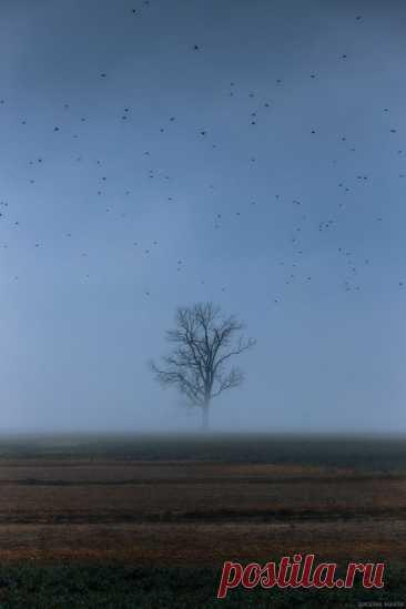 Утренняя картинка для медитации – представляем себя где-то там, в туманной тишине Калининградской области. Автор фото – Максим Смоляк.