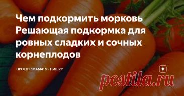 Чем подкормить морковь Решающая подкормка для ровных сладких и сочных корнеплодов