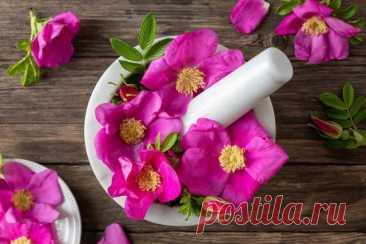 16 растений, цветки которых и красивы, и вкусны. Названия, описания, способ приготовления. Фото — Ботаничка.ru