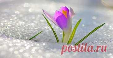 Удивились вчерашнему поздравлению с первым днем весны от Facebook? Именно 20 марта, в день, когда светлое и темное время суток сравнялись между собой, в этом году началась астрономическая весна в Северном полушарии и осень — в Южном.