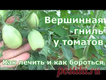 Вершинная гниль у томатов и магниевое голодание. Старые и новые методы борьбы с этими недугами