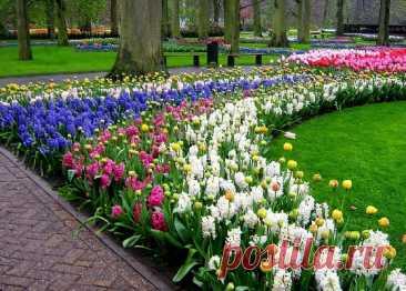 Королевский парк цветов Keukenhof, Нидерланды (Часть II)