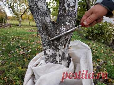 Сад осенью. Избавляемся от вредителей и болезней плодовых деревьев простыми и проверенными способами.   Дом цветов   Яндекс Дзен