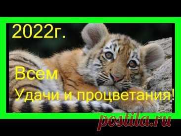 Подарок ТИГР Символ 2022 года / Tiger, the symbol of 2022