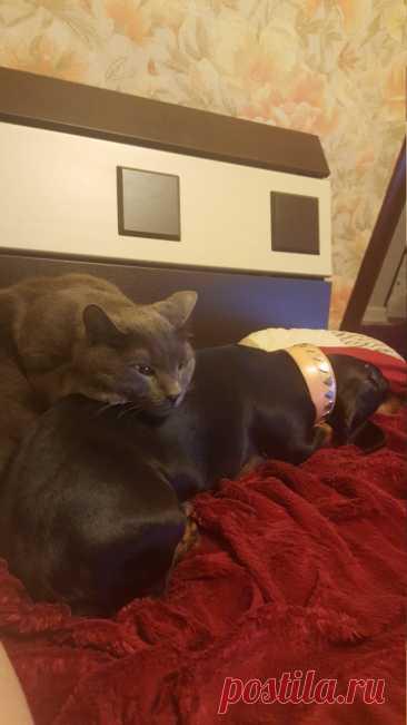 Если кот испортил воздух Да ладно вам, все же это делают. И люди, и коты. И... Читай дальше на сайте. Жми подробнее ➡