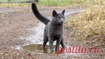 Cat playing in a puddle