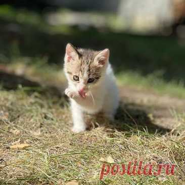 Photo by Котята даром Алматы on September 12, 2021. May be an image of cat and outdoors.
