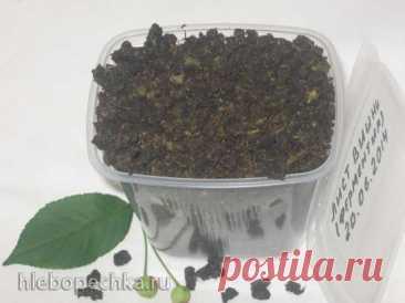 Ферментированный чай из листьев садовых и дикорастущих растений (мастер-класс) - рецепт с фото на Хлебопечка.ру