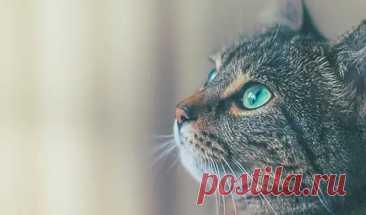 Как кошки чувствуют болезни человека и пытаются об этом предупредить - Сонники, гороскопы, гадания - медиаплатформа МирТесен