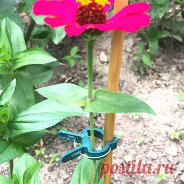 235.22руб. 38% СКИДКА|20 шт. зажимы для растений садовая Опора стебли цветок растение рычаг петля захват инструмент для лозы овощи помидоры|Каркасы и поддержки для растений|   | АлиЭкспресс Покупай умнее, живи веселее! Aliexpress.com