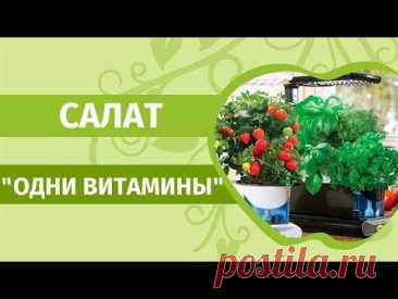 Зелень на подоконнике. Делаем самый весенний витаминный салат.