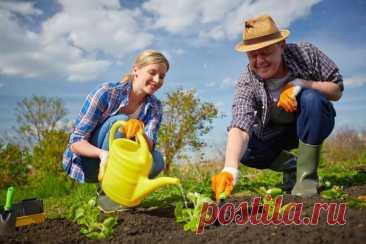 Работа в саду и на огороде в июне   Дача cадовода