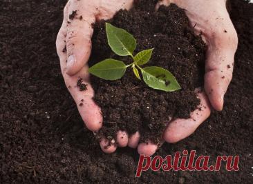 Я не трачу денег на удобрения, не горблюсь в саду целыми днями, а урожай получаю в 2 раза выше - спасибо секрету плодородия | Prosad.ru: Все про сад и дачу | Яндекс Дзен