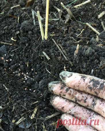 Какую зелень можно сажать под зиму - салат, редис, свекла, укроп Как и какую зелень можно сажать под зиму на дачном участке. Сначала тщательно взрыхляют и выравнивают грядку. Высевают укроп, петрушку.