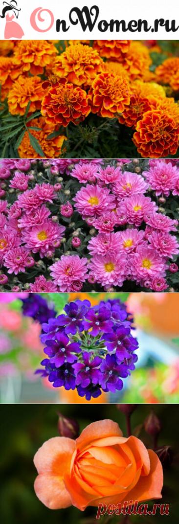 Какие цветы не боятся заморозков осенью-зимой и продолжают цвести - Onwomen.ru
