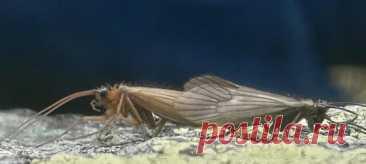 Обнаруженному в Косово ручейнику дали название с отсылкой к коронавирусу, и по иронии судьбы на изучение насекомого также повлияла пандемия.
