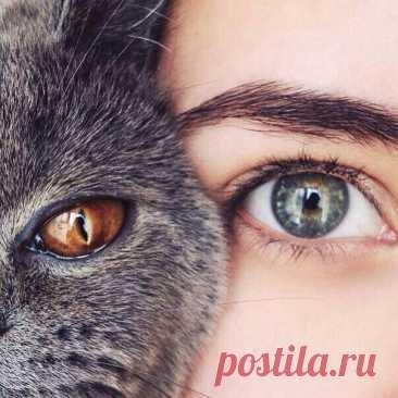 Кошка — магическое животное  Кошка — одно из самых магических животных на земле. Аура ее настолько велика, что охватывает не только конкретного человека, но и его семью, дом и территорию, которую кошка считает своей. Поэтому нужно понимать, что когда кошка трется о ваши ноги, то она не только ластится, пытаясь добиться своего, это значит ещё и то, что она делится с вами своей магической, астральной силой. Узрѣть цѣликомъ...