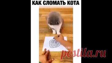 Голова закружилась!))))))))))