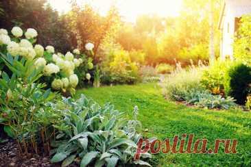 Типы освещенности на участке — как подобрать идеальное место растениям? Фото — Ботаничка.ru