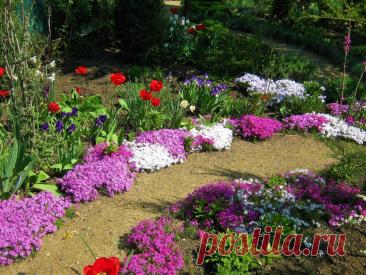 Флоксы шиловидные - прекрасное украшение весеннего сада.   МОЙ САД У ДОМА   Яндекс Дзен