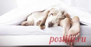 Секрет спокойного сна раскрыт! Нужно лишь повернуть кровать… — 1001 СОВЕТ