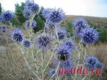 Растения, защищающие от порчи и сглаза / Мистика