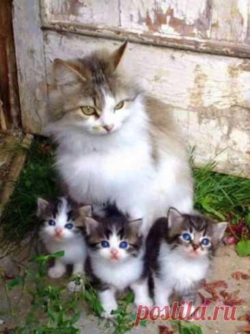 А мы красивые, как мама!