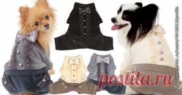 Конструирование одежды для собак