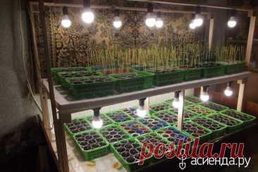 Какая лампа лучше для выращивания рассады: биколор, full или full*2 / Асиенда.ру