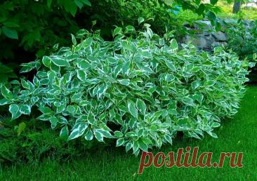 Какой декоративный кустарник посадить осенью | ДОБАВЬ ЦВЕТОВ! | Яндекс Дзен
